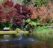 BISLEY GARDENS,  MOUNT WILSON,  NSW. by Phil Woodman