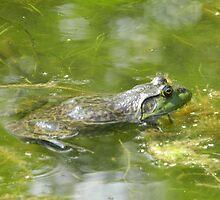 Happy Frog  by Marijane  Moyer