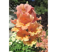 Peachy Flower! Photographic Print