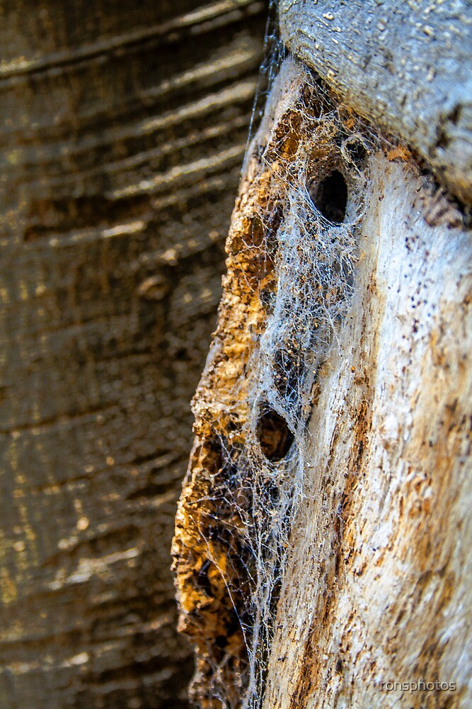 Bark patterns and spider web. by ronsphotos