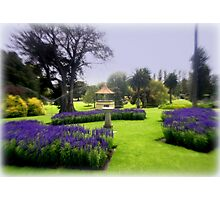 Botanical Gardens Photographic Print