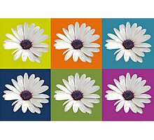 White African Daisy Collage On Bright Background Photographic Print