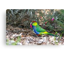 Red Capped Parrot Canvas Print