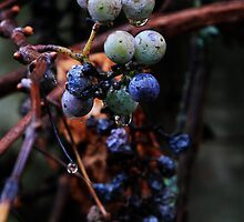 Grapes and Raisins by Nazareth
