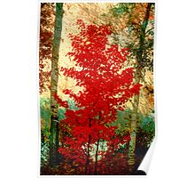 Scarlet Maple Poster