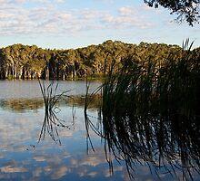 Lake Ainsworth Reeds by Karen Eaton