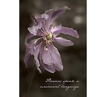 From the Gardens of Mt Wilson ~ No 1 Photographic Print