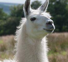 Loki the llama by Elaine Hillson