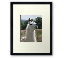 Loki the llama Framed Print