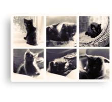 Kittens at Play Canvas Print