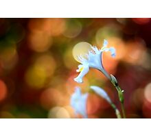 Spring lights... Photographic Print