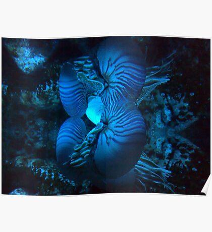 Nautilus reflection Poster