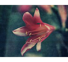Clivia Magic Photographic Print
