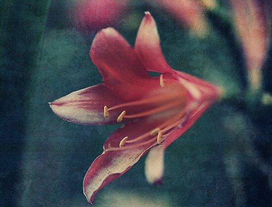 Clivia Magic by Tangerine-Tane
