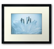 Blue Lily Framed Print