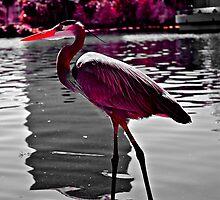 crane  by 1EddiejrAlvarez