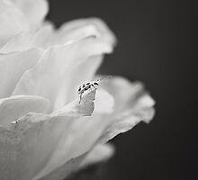 Bug on a Rose BW by Sazzyshortness