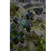 JWFrench Collection Flower 1 Photographic Print