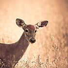 Autumn Doe by michelsoucy