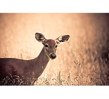 Autumn Doe Photographic Print