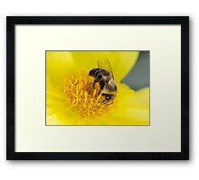 Bumble Bee on Yellow Flower Framed Print