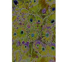 JWFrench Collection Flower 5 Photographic Print