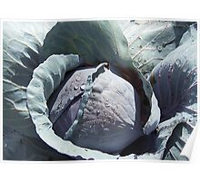 Of Kingly Cabbages Poster