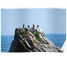 Birds on a large rock  Poster