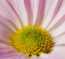 Pink and Yellow by michelsoucy