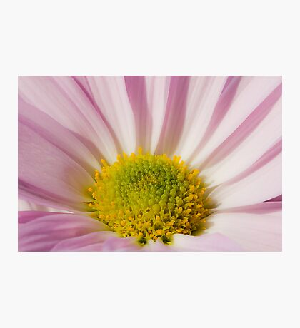 Pink and Yellow Photographic Print