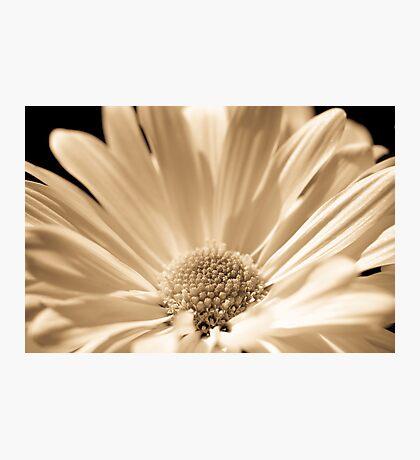 Monotone floral Photographic Print