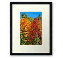 Gatineau Park Colourburst Framed Print