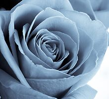 Blue Rose by michelsoucy