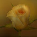 So soft by Nicole W.