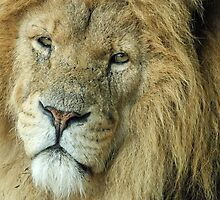Eye to Eye with The King by Mark Hughes