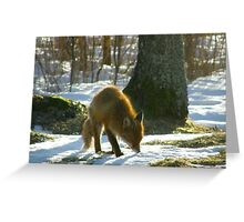 Vulpes Vulpes sniffing Greeting Card