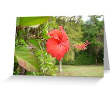 Flower in Hato Rey 1 Greeting Card