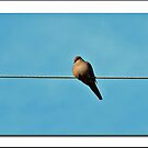 Like a bird on a wire........ by Bine