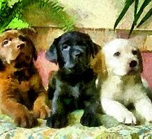 Labrador Retriever Pups Trio by doggylips