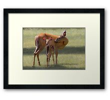 Doe with Fawn Framed Print