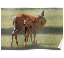 Doe with Fawn Poster