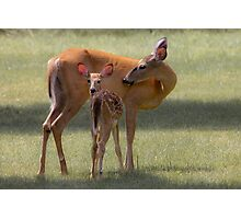 Doe with Fawn Photographic Print