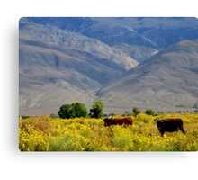 Happy Cows Canvas Print