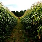 McNab Corn Maze - Cedar by rsangsterkelly