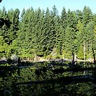 Westwood Lake, Nanaimo BC - Trees Reflected by rsangsterkelly