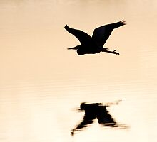Great Blue Heron over water by michelsoucy