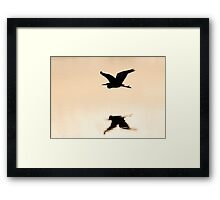 Great Blue Heron over water Framed Print