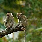 monkeys by 1EddiejrAlvarez