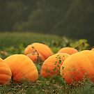 Pumpkin Patch by reindeer