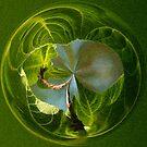 Cabbage window by zzsuzsa